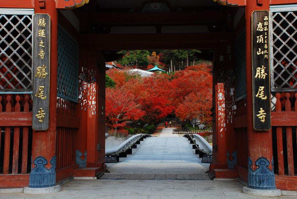 大阪箕面にある勝尾寺(かつおじ)秋はもみじまつりが開かれ燃えるような紅葉が楽しめます。