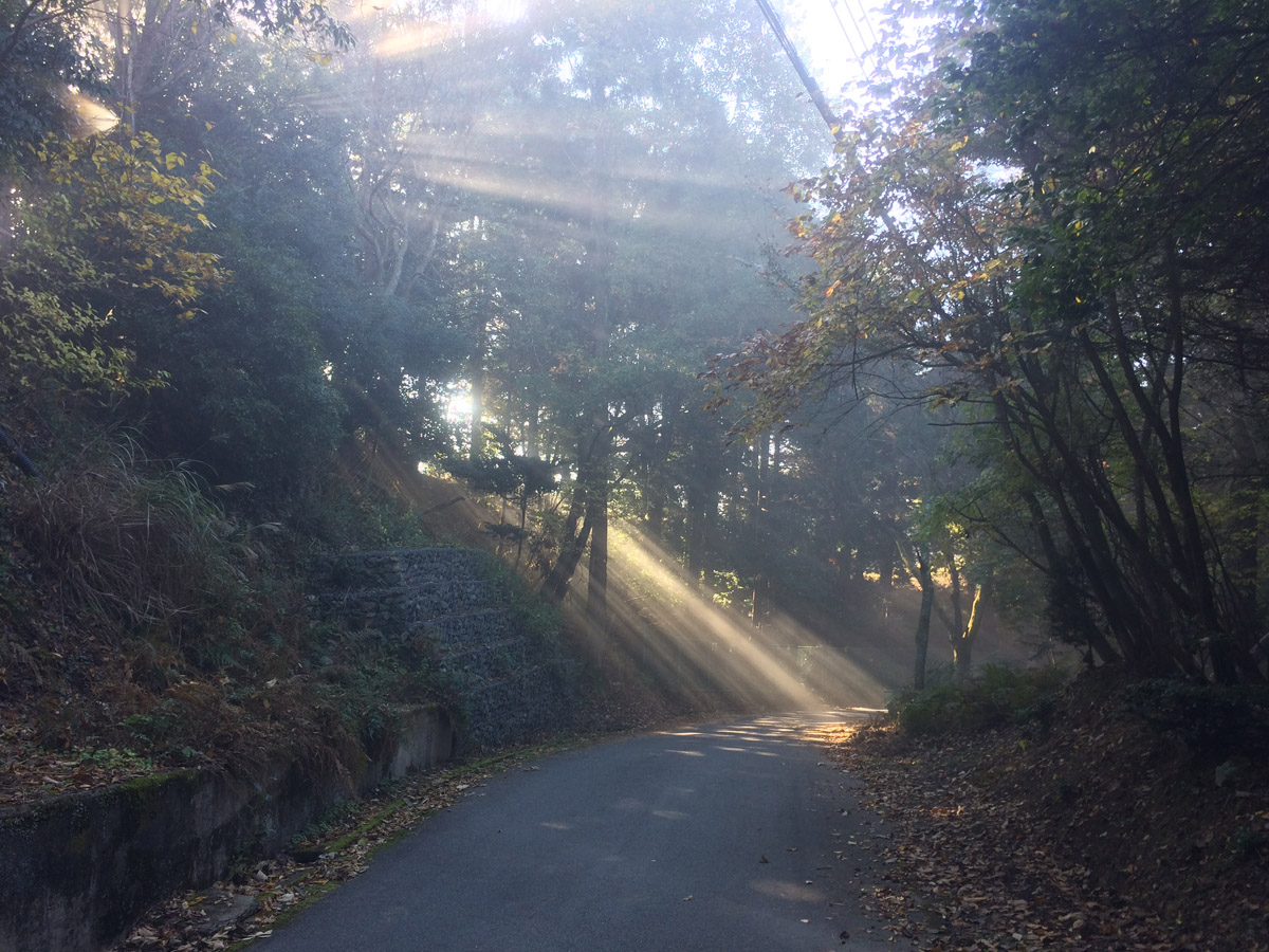 霧が出ていると竜ヶ尾山への道もこんな幻想的な風景に。