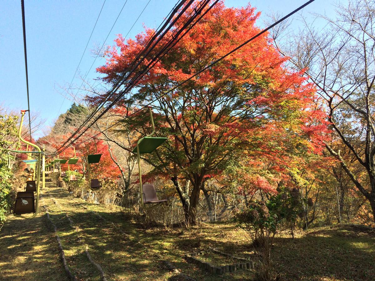 妙見山のリフト。紅葉の時期や桜、そして紫陽花の時期は素晴らしい景観の中をゆったり眺められます。冬季は運休。