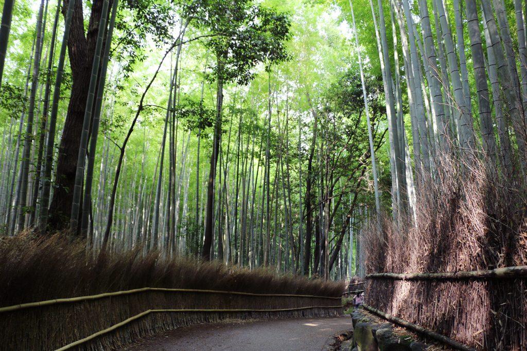 竹林の小径。特に海外の観光客に人気のスポット。ガイドブック「ロンリープラネット」の表紙にもなっています。