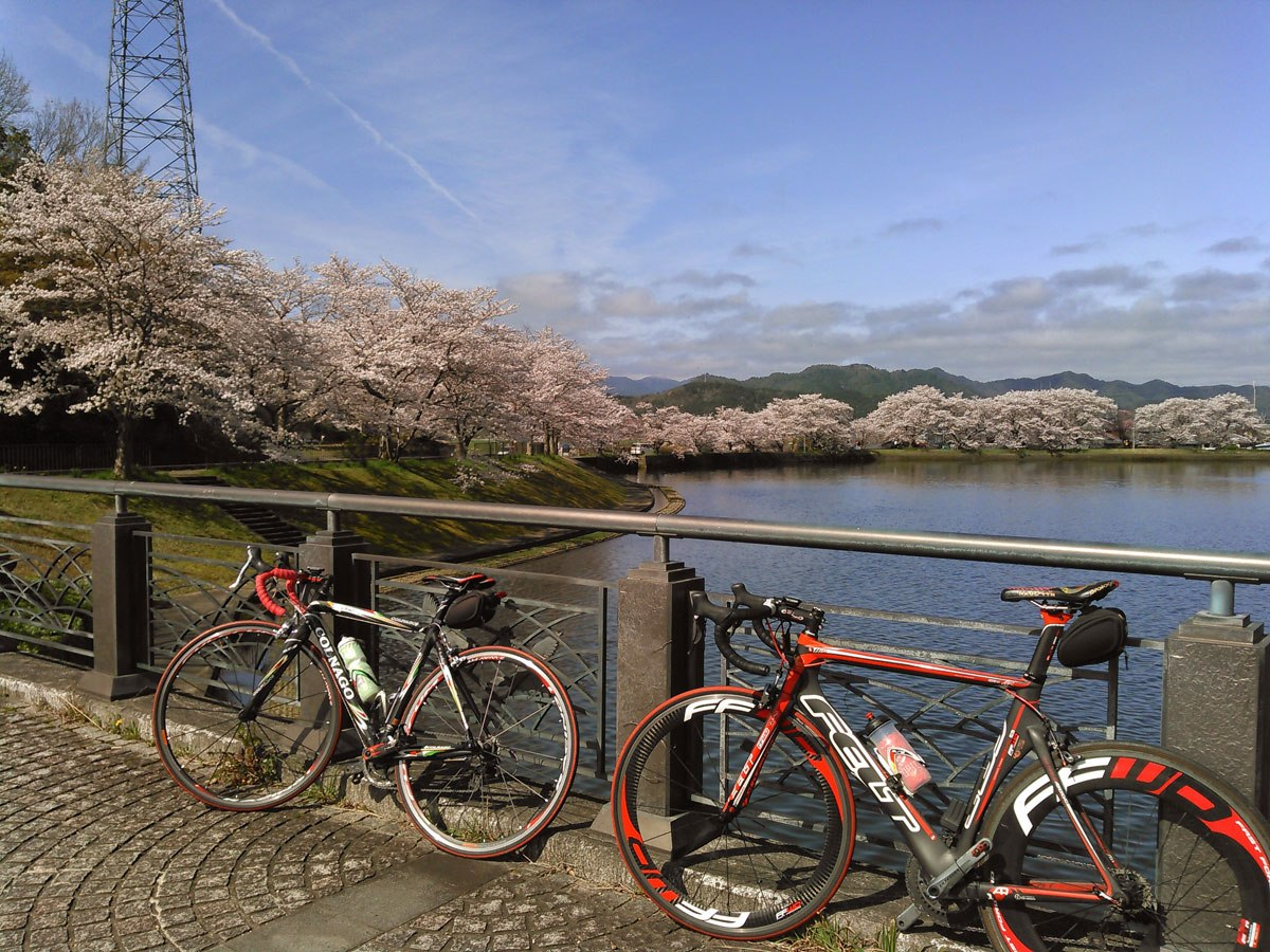 桜のシーズンには平の沢池は数多くの桜に囲まれます。こちらもおすすめ!